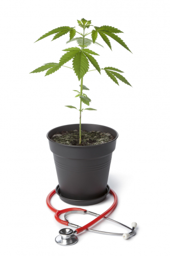 Medical Marijuana, Cannabis plant with stethoscope