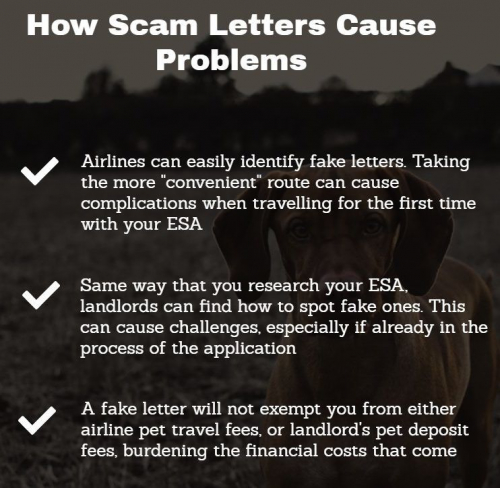 How scam ESA letters cause problems