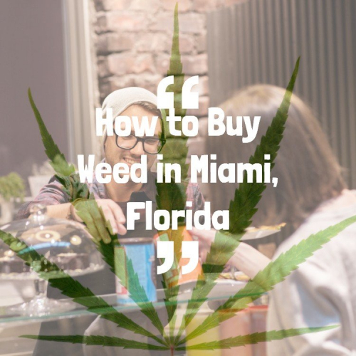 How to Buy Weed in Miami, Florida