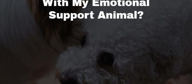 Traveling with an Emotional Support Animal
