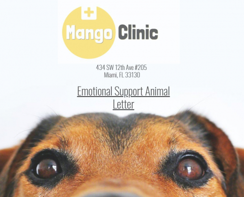 Emotional Support Animal Certifications in Miami