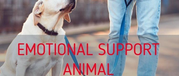 Emotional Support Animal for PTSD