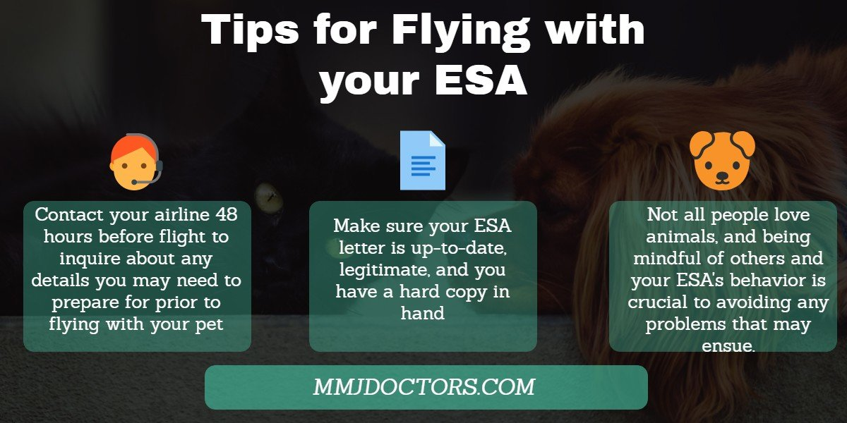 flying with your Emotional support animal tips